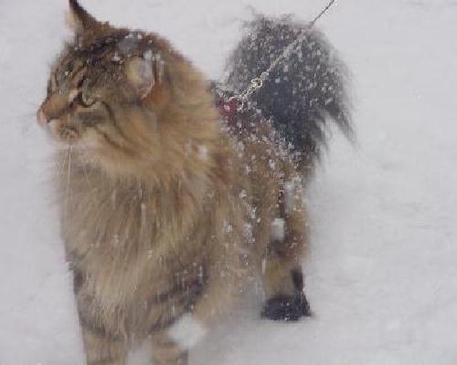 Jamie im Schnee 2u